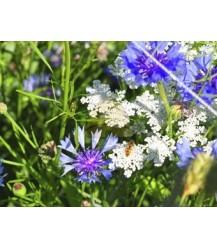Tübinger Blumenmischung