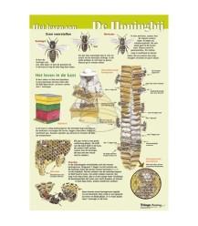 Das Leben der Honigbiene A4-Karte
