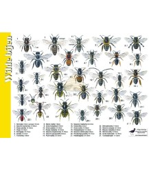 Wildbienen 'Suchkarte' A4